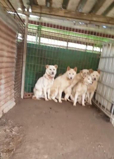 trauma_troopers_korea_dogs_1