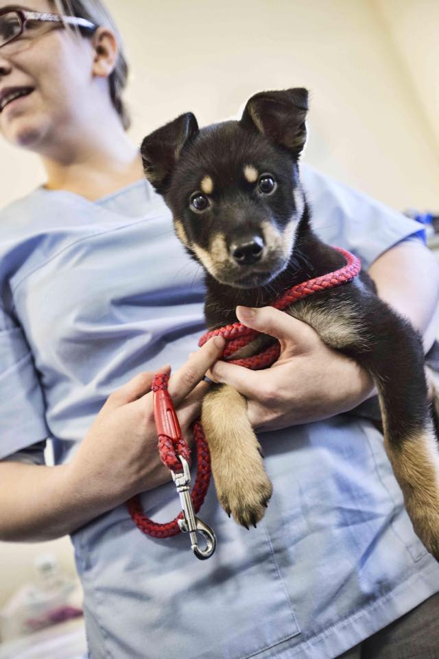 trusty_paws_homeless_clinic_2