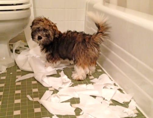 why_dog_goes_to_bathroom_2