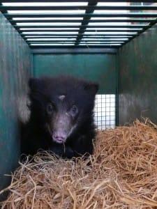 bear-cub-poachers-2