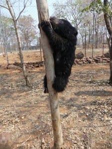 bear-cub-poachers-3