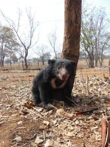 bear-cub-poachers-4