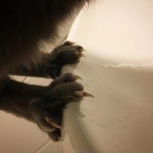 cat-claws-1