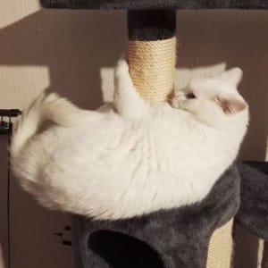 cat-claws-5