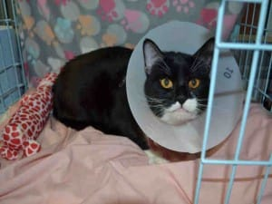 cat-valtentine-declaw-rescue-1