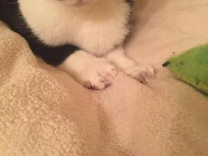 cat-valtentine-declaw-rescue-4