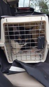 cat-valtentine-declaw-rescue-5