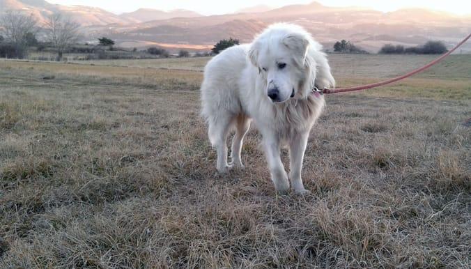 davinci_dog_senior_adoption_1