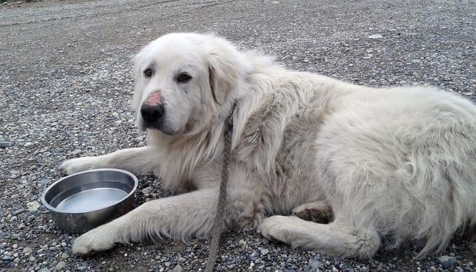 davinci_dog_senior_adoption_3