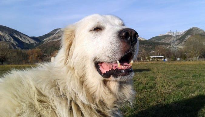 davinci_dog_senior_adoption_4