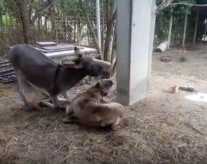 dog-donkey-friends-2