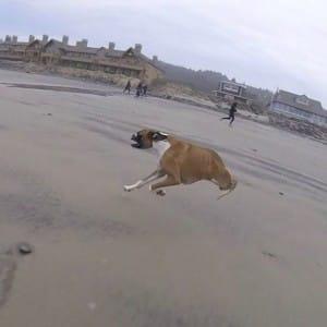 dog-duncan-2legs-2