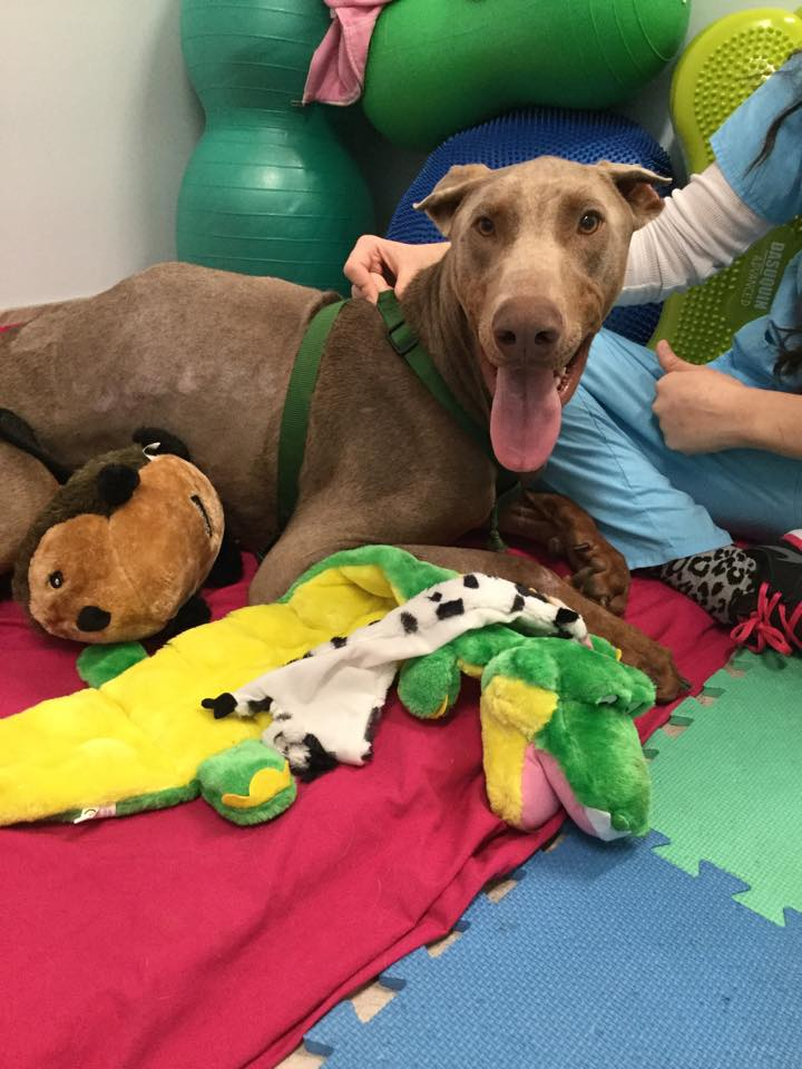 dog-spencer-spine-injury-4
