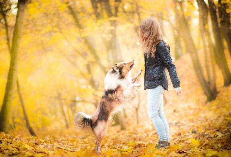 dog_human_goodness_2