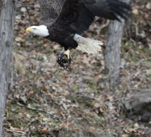 eagle-trap-iowa-4