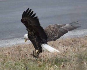 eagle-trap-iowa-6