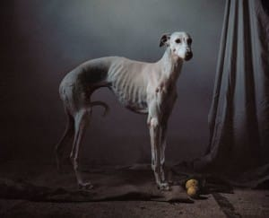 greyhounds-photoshoot-spain-2