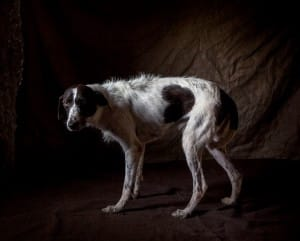 greyhounds-photoshoot-spain-6