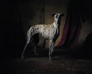 greyhounds-photoshoot-spain-9