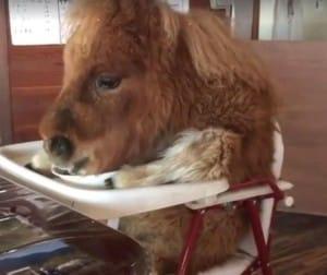 horse-chair-video-1
