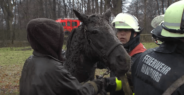 horse-stuck-swamp-10