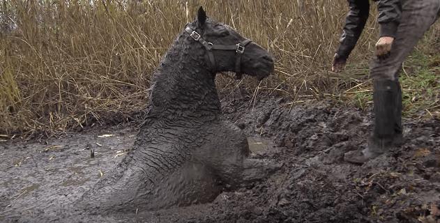 horse-stuck-swamp-4