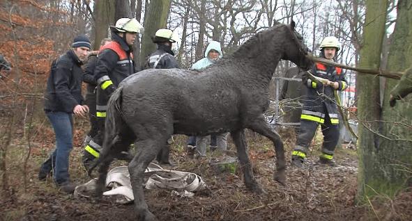 horse-stuck-swamp-9