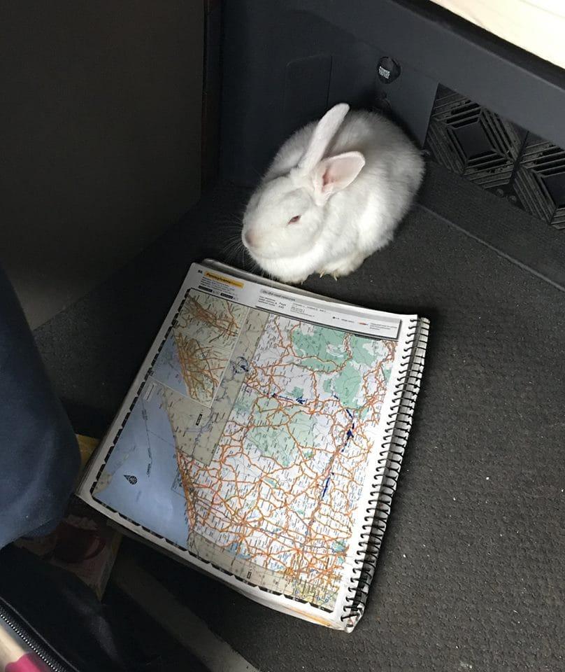 rabbit_dog_highway_rescue_1