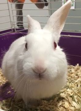 rabbit_dog_highway_rescue_2