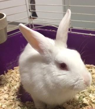 rabbit_dog_highway_rescue_4