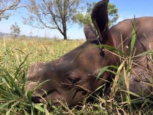 rhino-attack-thulathula-5