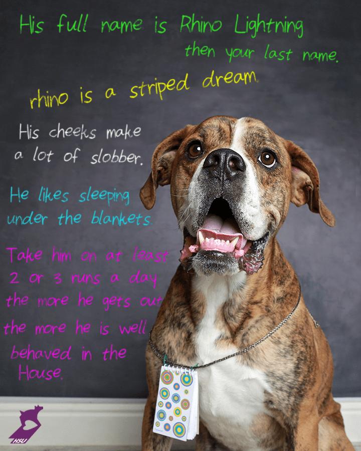 rhino_note_adoption_dog_2