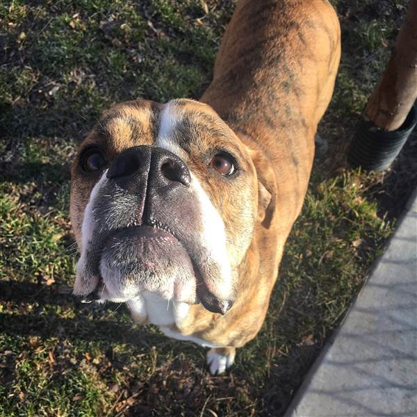 rhino_note_adoption_dog_3