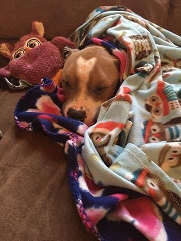 russ_dog_cuddles_adoption_4