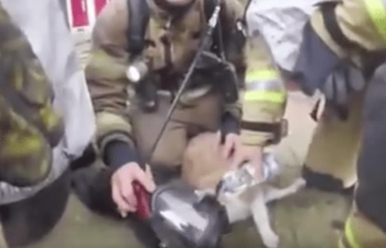 sammy_cat_rescue_fire_1