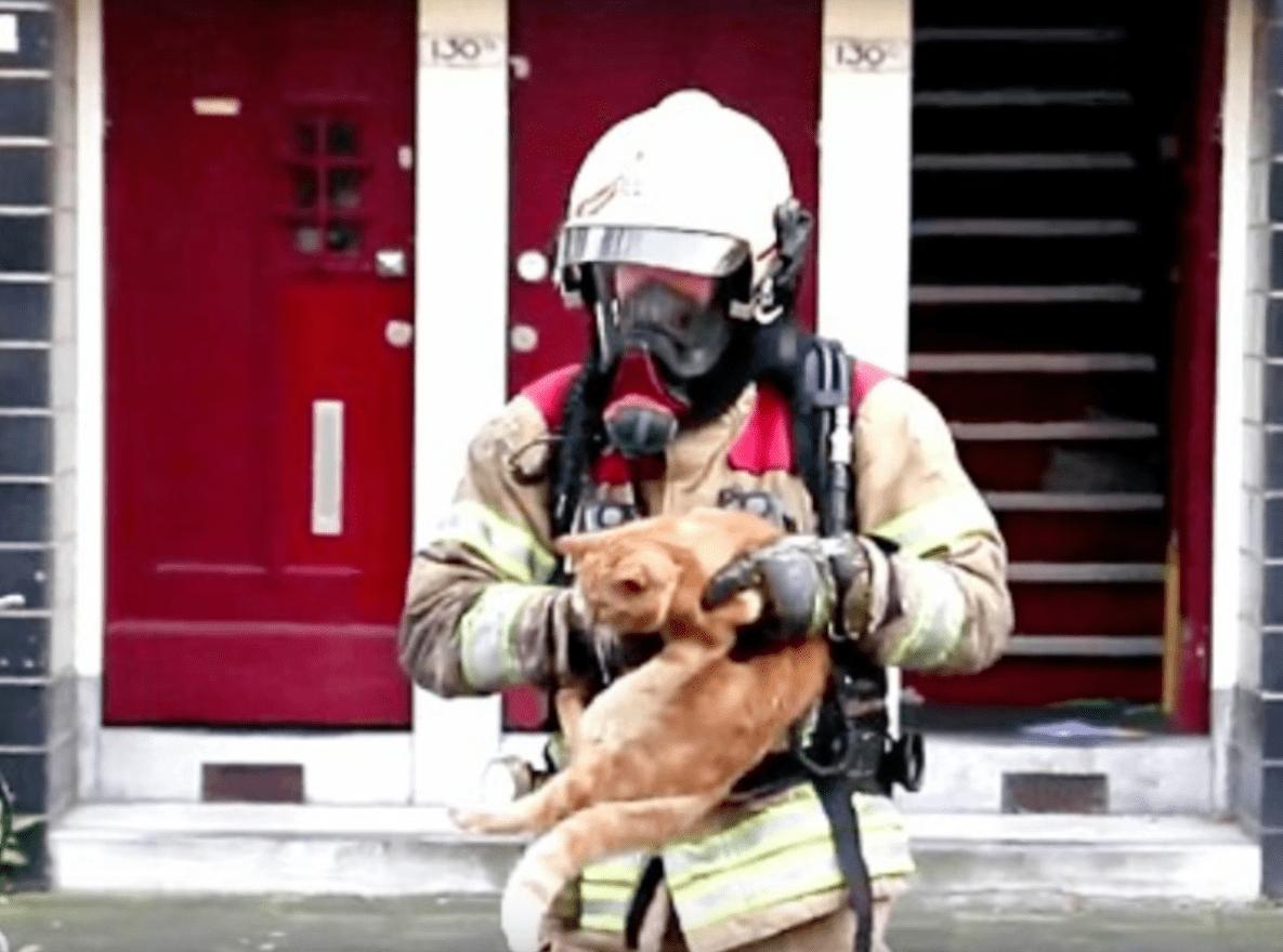 sammy_cat_rescue_fire_2