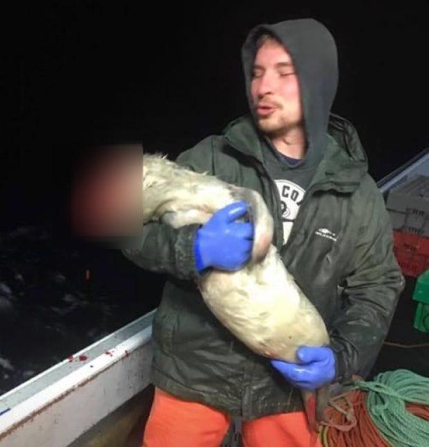 seal_abused_fisherman_4