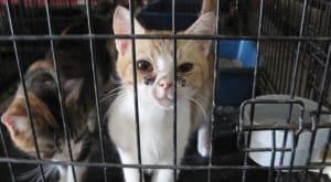 sf-rescue-pets-5