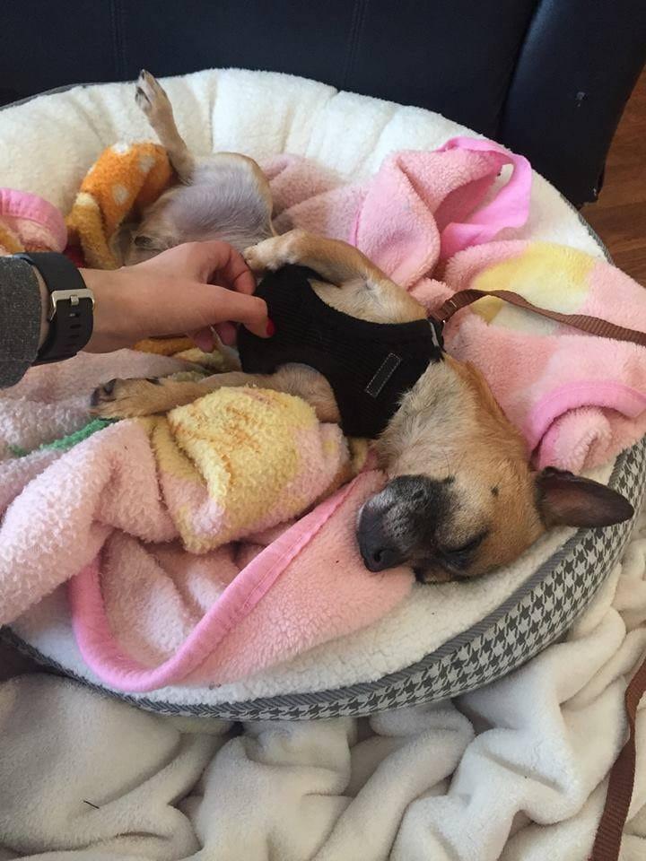 teddy_bite_rescue_1