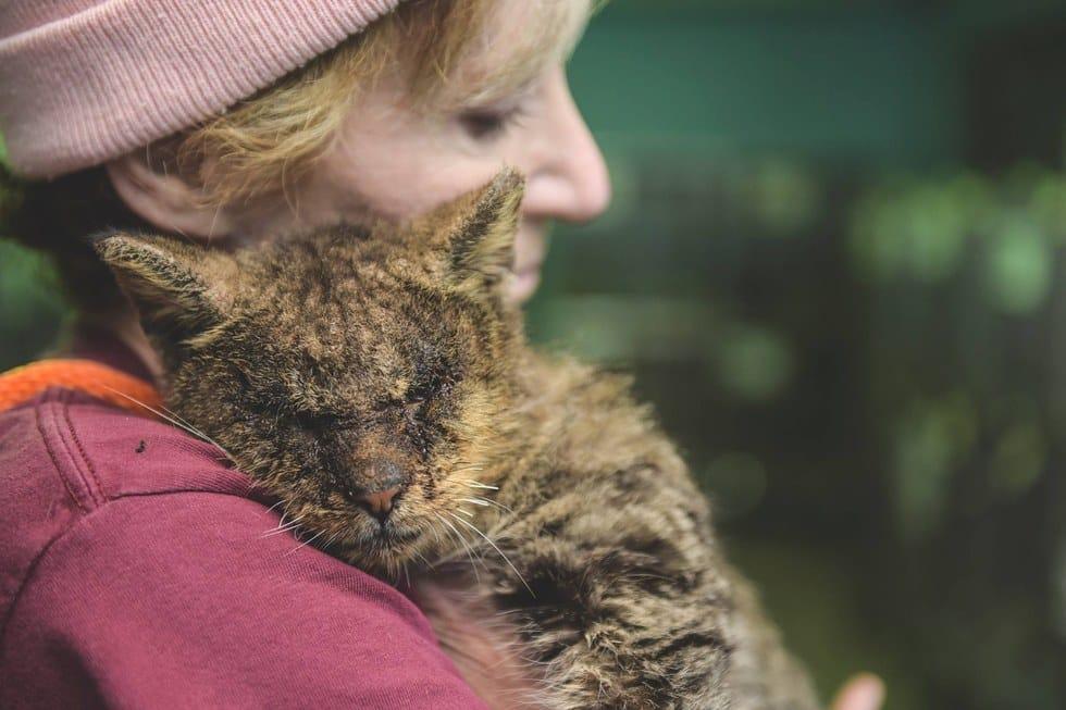 valentino_cat_mange_rescue_4