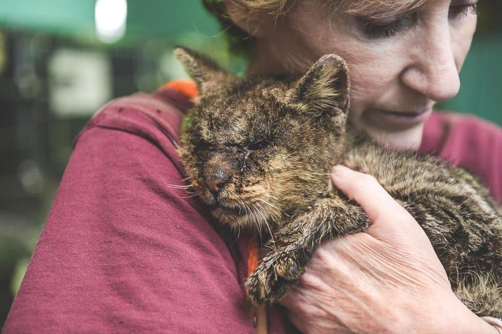 valentino_cat_mange_rescue_5