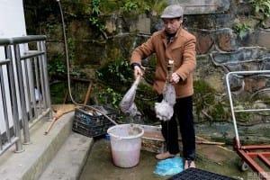 zoo-china-starving-10#