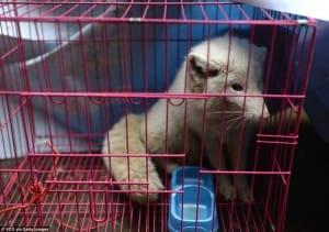 zoo-china-starving-11