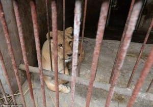 zoo-china-starving-2