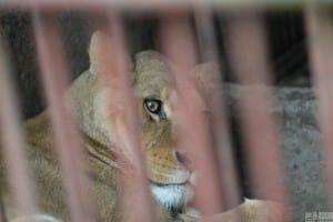 zoo-china-starving-5