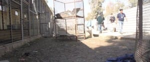 zoo-mosul-four-paws-1