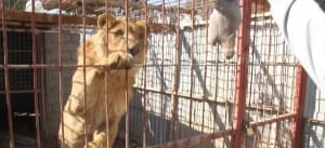 zoo-mosul-four-paws-2