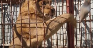zoo-mosul-four-paws-3