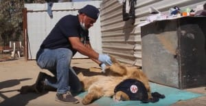 zoo-mosul-four-paws-4