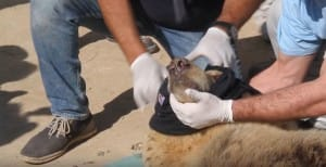 zoo-mosul-four-paws-5
